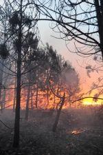 Tűzgyújtási tilalom Bács-Kiskun Megyében